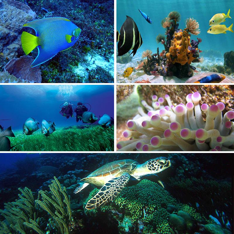 Cozumel diving trips from cancun or riviera maya - Cozumel dive packages ...