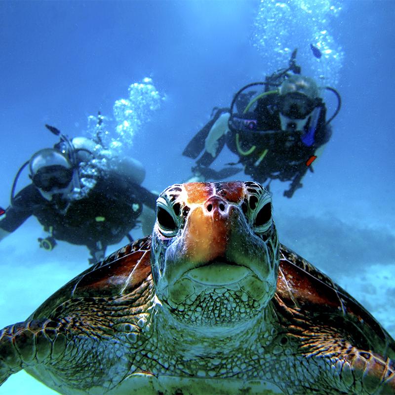 Bel Air Collection Resort Spa Cancun Scuba Diving