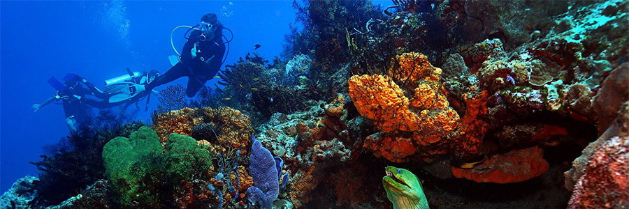 Discover Scuba Diving Course in Cozumel – Tour Picture