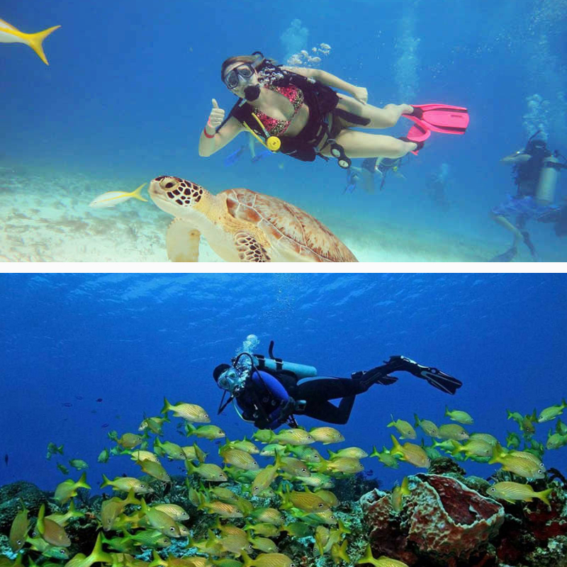 Dive and drive cozumel - Cozumel dive packages ...
